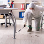 The Basics of Green Pest Control